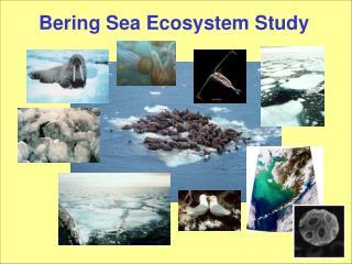 Bering Sea Ecosystem Study