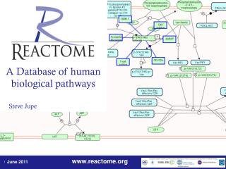 A Database of human biological pathways Steve Jupe