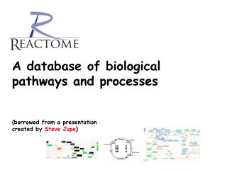 biocyc/ARA/new-image?type=PATHWAY&object=PWY-695