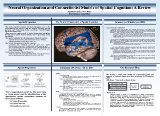 Neural Organization and Connectionist Models of Spatial Cognition: A Review