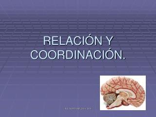 RELACI N Y COORDINACI N.