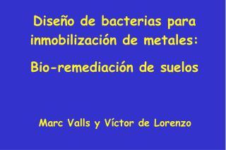 Dise�o de bacterias para inmobilizaci�n de metales: Bio-remediaci�n de suelos