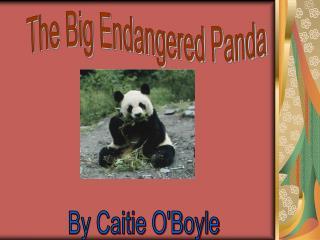 The Big Endangered Panda