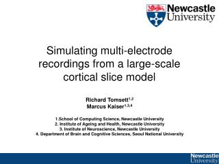 Simulating multi-electrode recordings from a large-scale cortical slice model