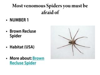 The Most Venomous Spiders