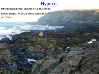 Functional hypoxia : induced by high activity.