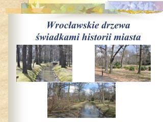 Wrocławskie drzewa  świadkami historii miasta
