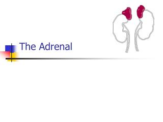 The Adrenal