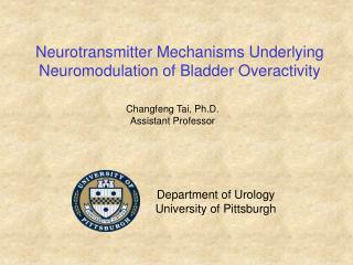Neurotransmitter Mechanisms Underlying Neuromodulation of Bladder Overactivity