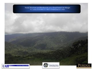 Forest Structure and Biodiversity on a Cloud Forest Lee Margin