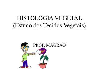 HISTOLOGIA VEGETAL Estudo dos Tecidos Vegetais