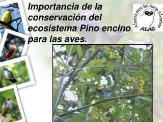 Importancia de la conservación del ecosistema Pino encino para las aves.