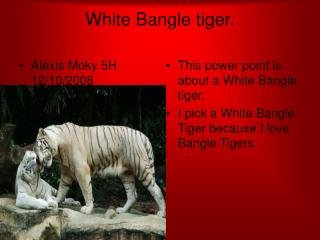 White Bangle tiger.