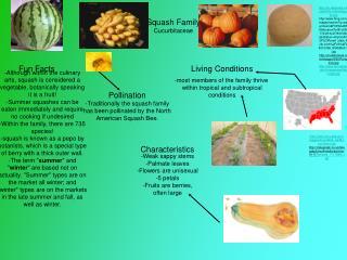 Squash Family Cucurbitaceae