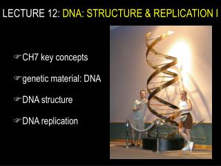 CH7 key concepts  genetic material: DNA DNA structure DNA replication