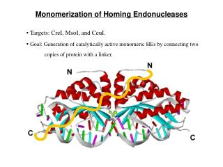 Monomerization of Homing Endonucleases