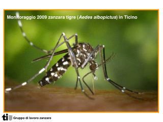 Gruppo di lavoro zanzare