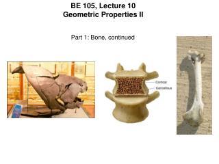 BE 105, Lecture 10 Geometric Properties II