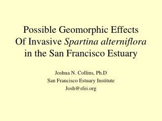 Possible Geomorphic Effects Of Invasive  Spartina alterniflora in the San Francisco Estuary