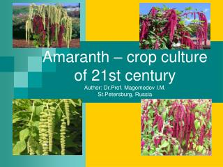 Amaranth – crop culture of 21st century Author: Dr.Prof. Magomedov I.M. St.Petersburg, Russia