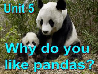Why do you  like pandas?