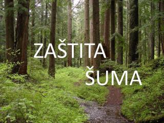Zaštita šuma