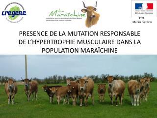 PRESENCE DE LA MUTATION RESPONSABLE DE L'HYPERTROPHIE MUSCULAIRE DANS LA POPULATION MARAÎCHINE