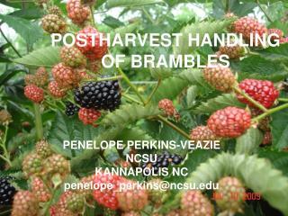 POSTHARVEST HANDLING OF BRAMBLES