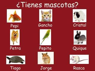 ¿Tienes mascotas?