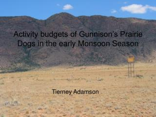 Activity budgets of Gunnison's Prairie Dogs in the early Monsoon Season