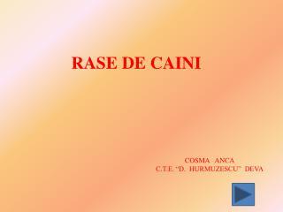 RASE DE CAINI