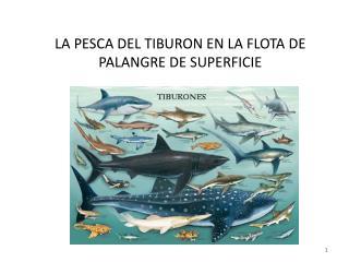 LA PESCA DEL TIBURON EN LA FLOTA DE PALANGRE DE SUPERFICIE