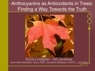 Anthocyanins as Antioxidants in Trees: Finding a Way Towards the Truth