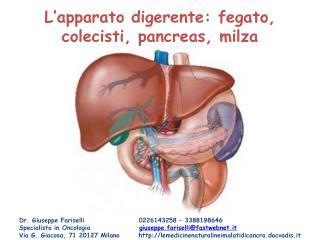 L'apparato digerente: fegato, colecisti, pancreas, milza
