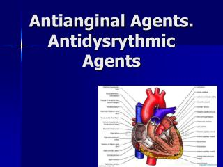 Antianginal  Agents . Antidysrythmic  Agents