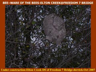 BEE�WARE OF THE BEES-ELTON CREEK@FREEDOM 7 BRIDGE
