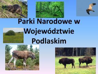 Parki Narodowe w Wojew�dztwie Podlaskim