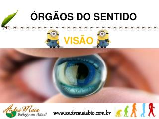 ÓRGÃOS DO SENTIDO