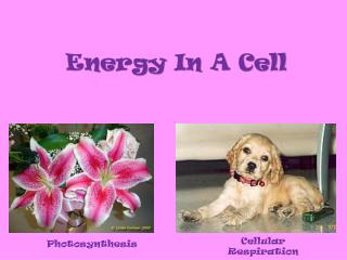 Energy In A Cell
