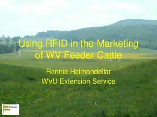Using RFID in the Marketing of WV Feeder Cattle
