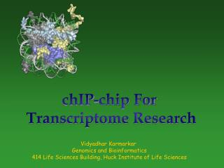 chIP-chip For  Transcriptome Research
