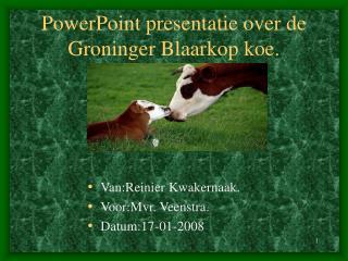 PowerPoint presentatie over de Groninger Blaarkop koe.