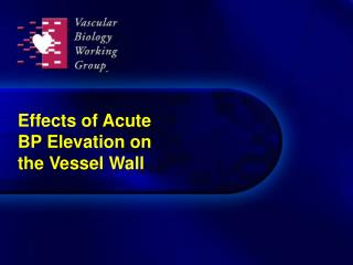 Effects of Acute BP Elevation on the Vessel Wall