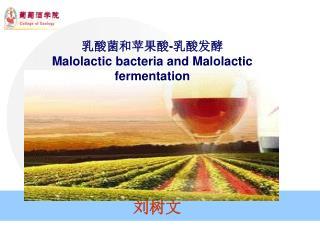 乳酸菌和苹果酸 - 乳酸发酵 Malolactic bacteria and Malolactic fermentation