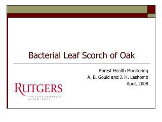 Bacterial Leaf Scorch of Oak