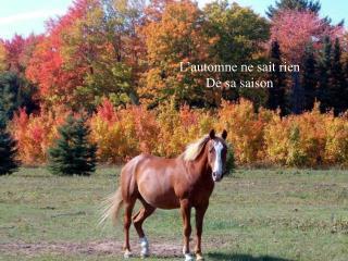 L'automne ne sait rien De sa saison