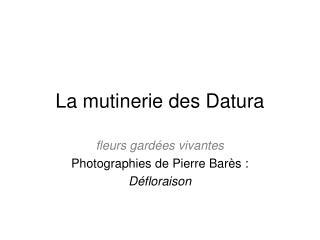 La mutinerie des Datura
