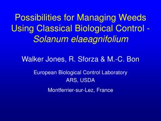 Possibilities for Managing Weeds Using Classical Biological Control - Solanum elaeagnifolium
