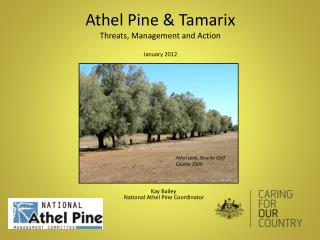 Athel Pine &  Tamarix Threats, Management and Action January 2012