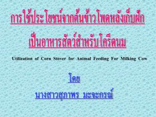 Utilization  of  Corn  Stover  for  Animal  Feeding  For  Milking  Cow